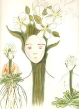 dessin fleur blanche